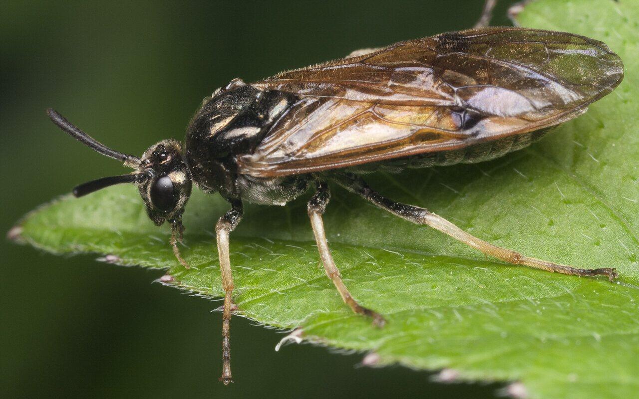 Hymenoptera-1084.jpg