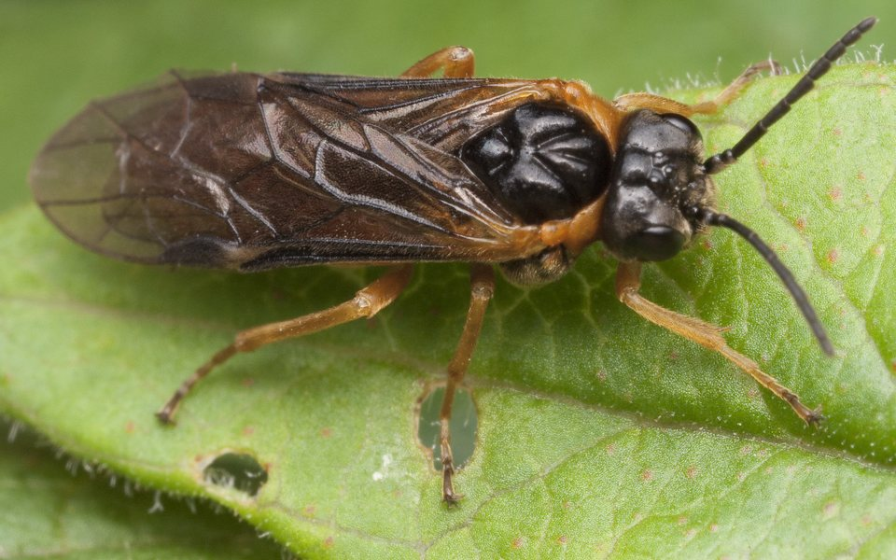 Hymenoptera-1089.jpg