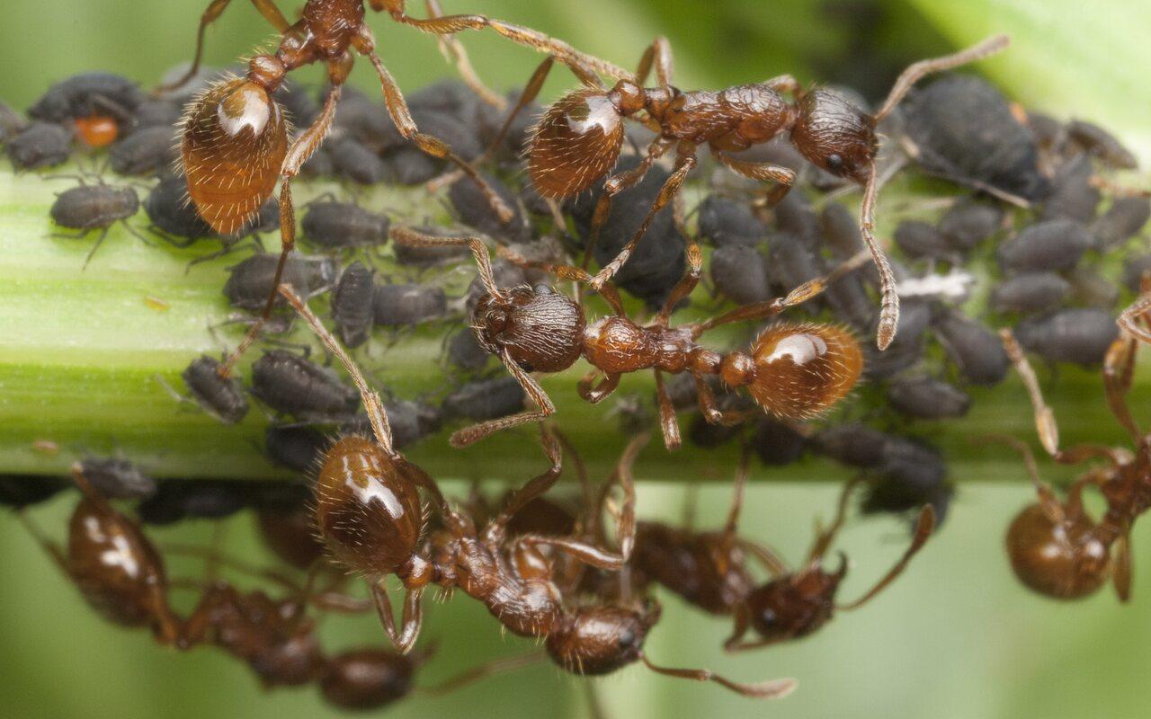 Formicidae-1233.jpg