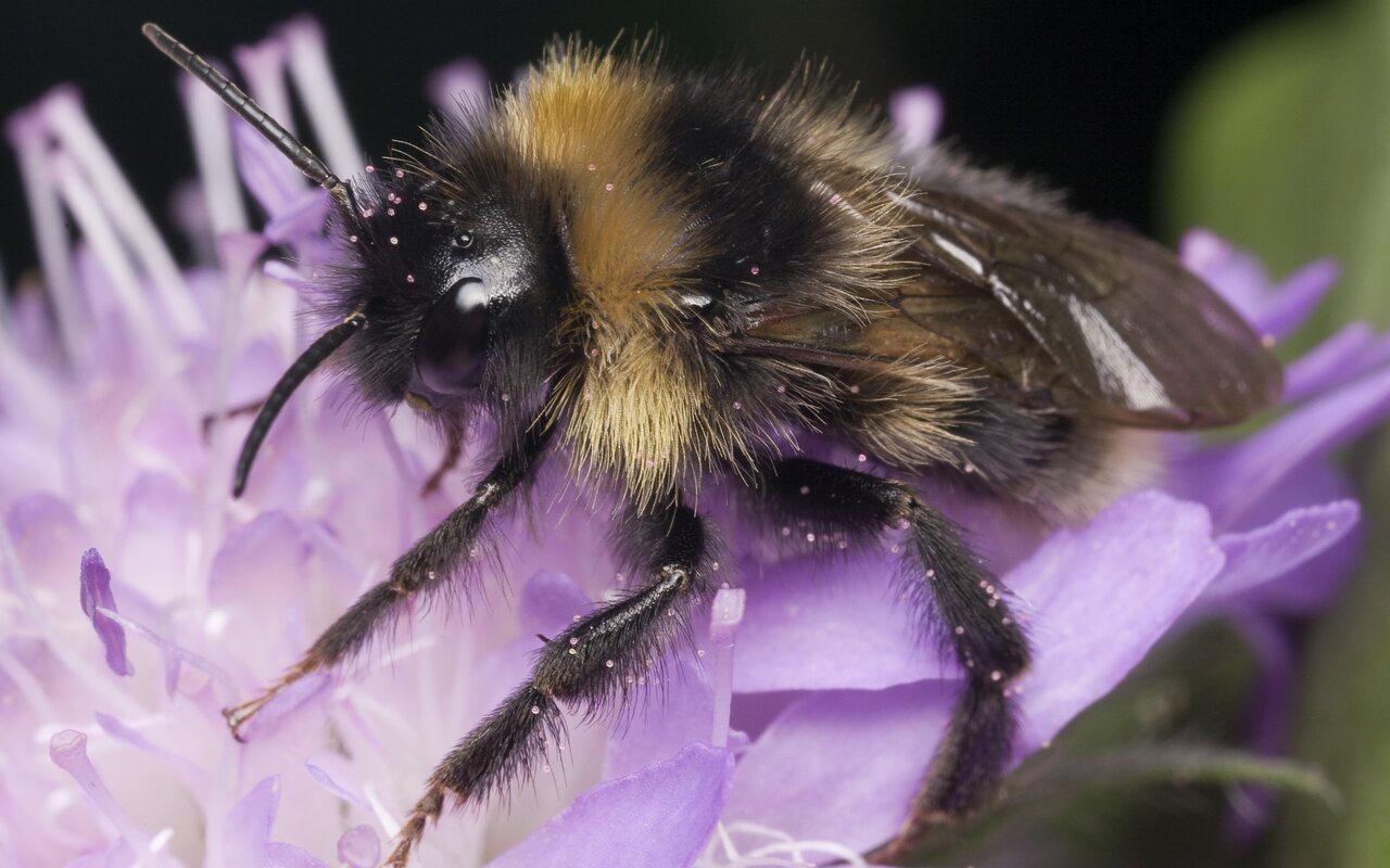 Apidae-1280.jpg