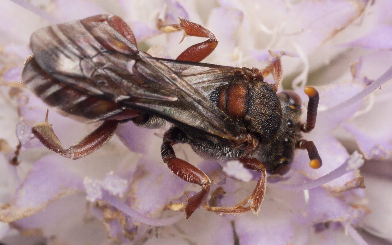 Hymenoptera-1289.jpg