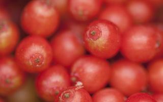 Sambucus racemosa · raudonuogis šeivamedis