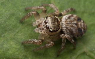 Arachnida · voragyviai