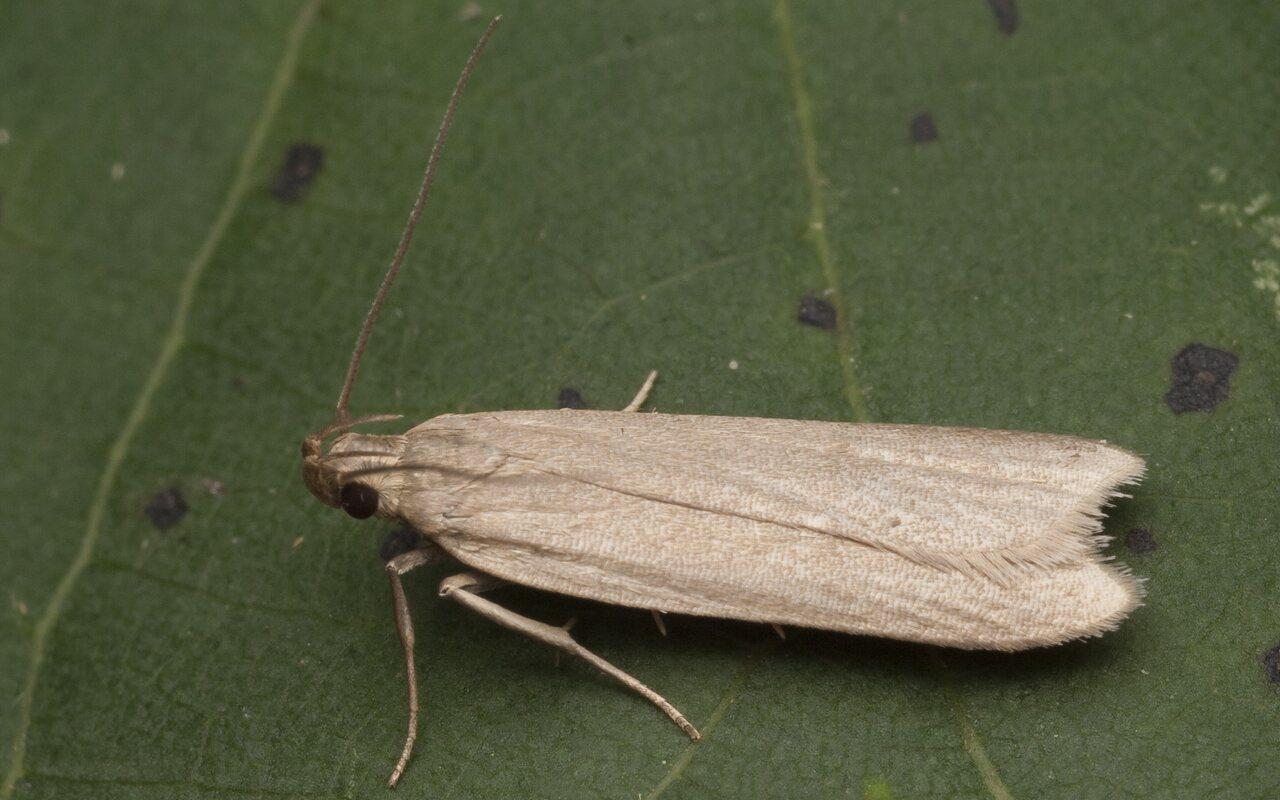 Lepidoptera-1688.jpg