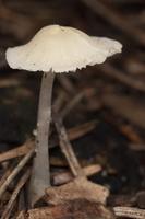 Fungi 1706