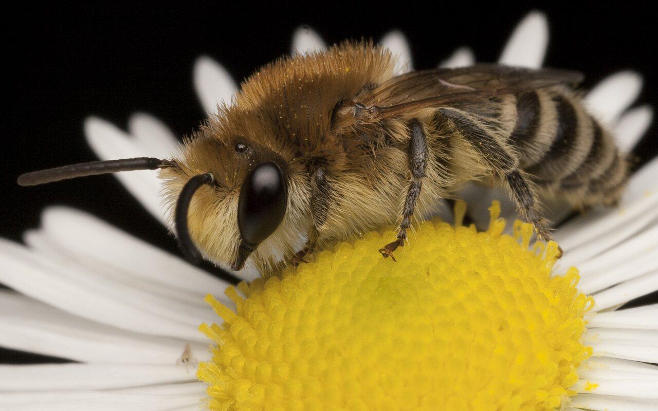 Apidae-1738.jpg