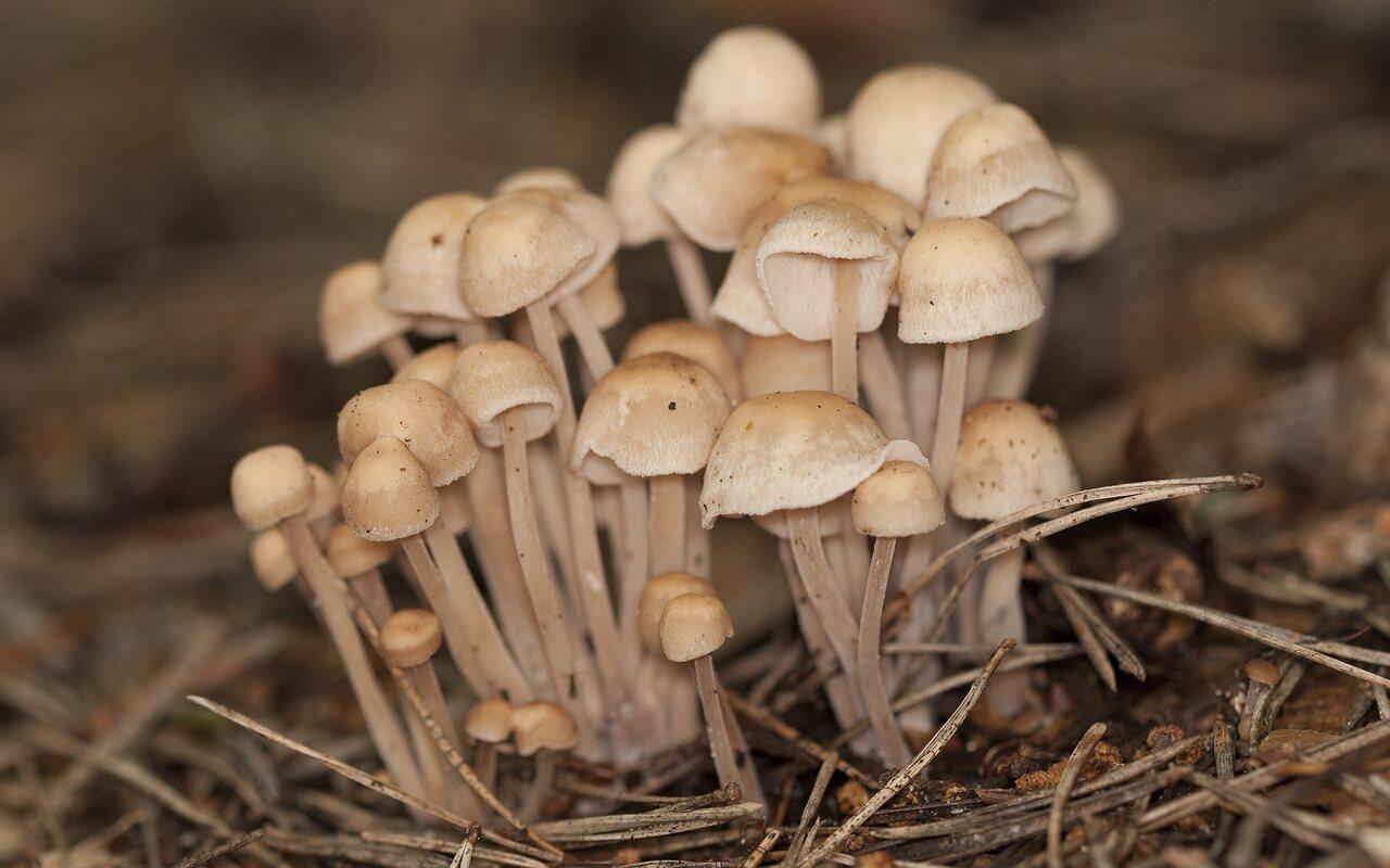 Fungi-1834.jpg