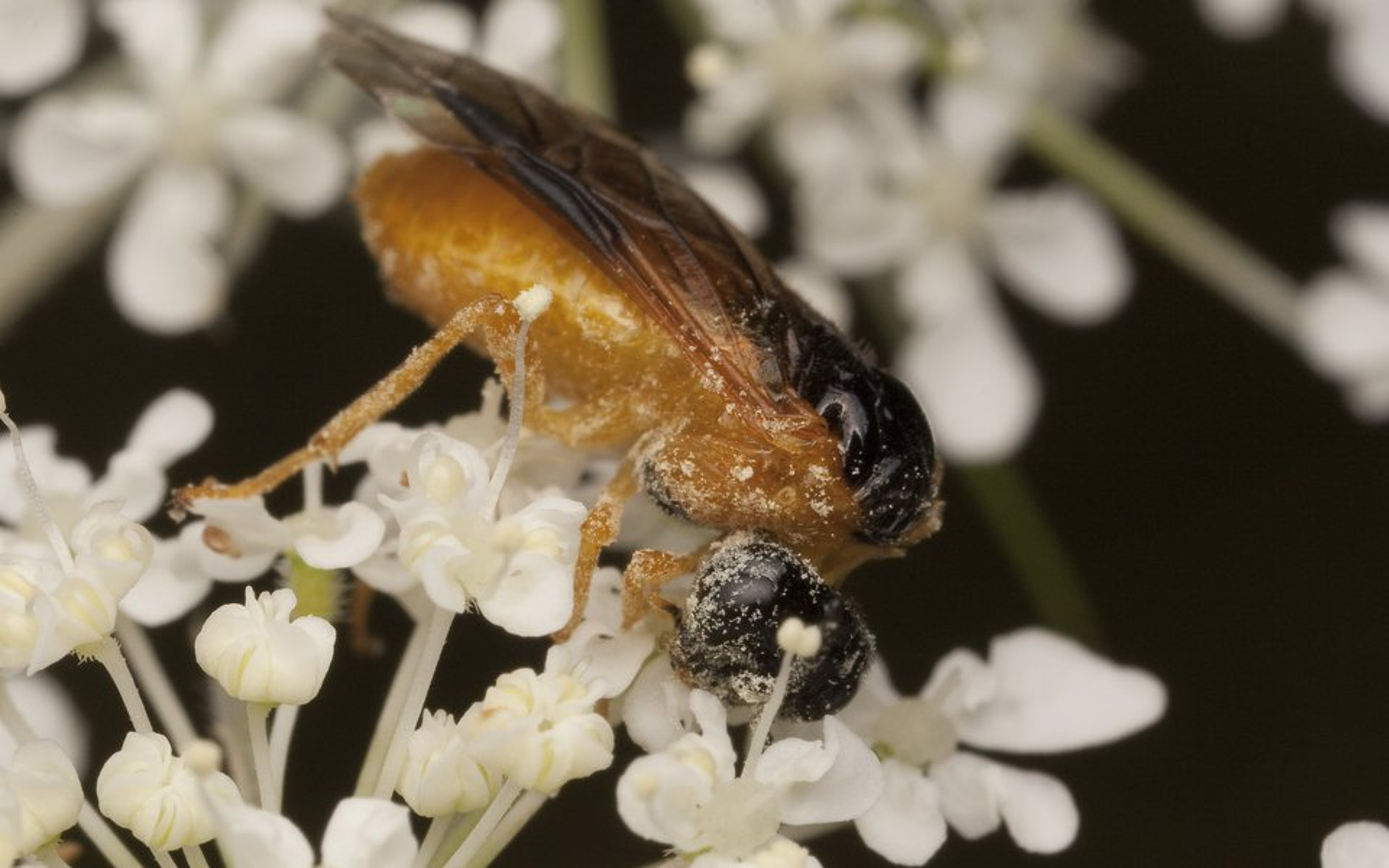 Hymenoptera-1983.jpg