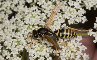 Hymenoptera 2030