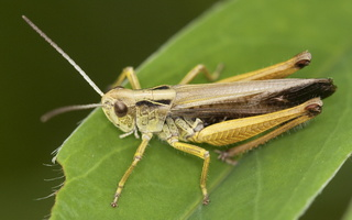 Insecta · vabzdžiai