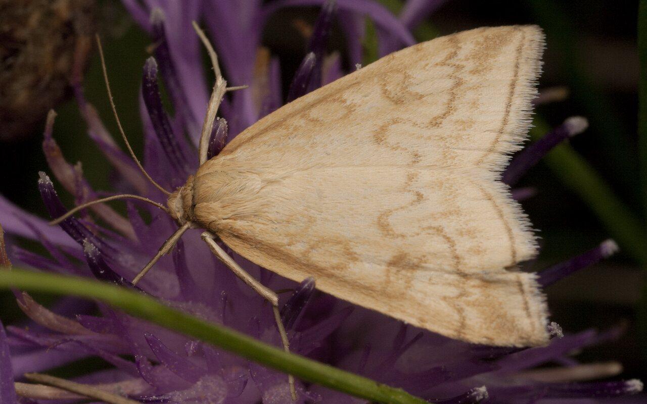 Lepidoptera-2150.jpg