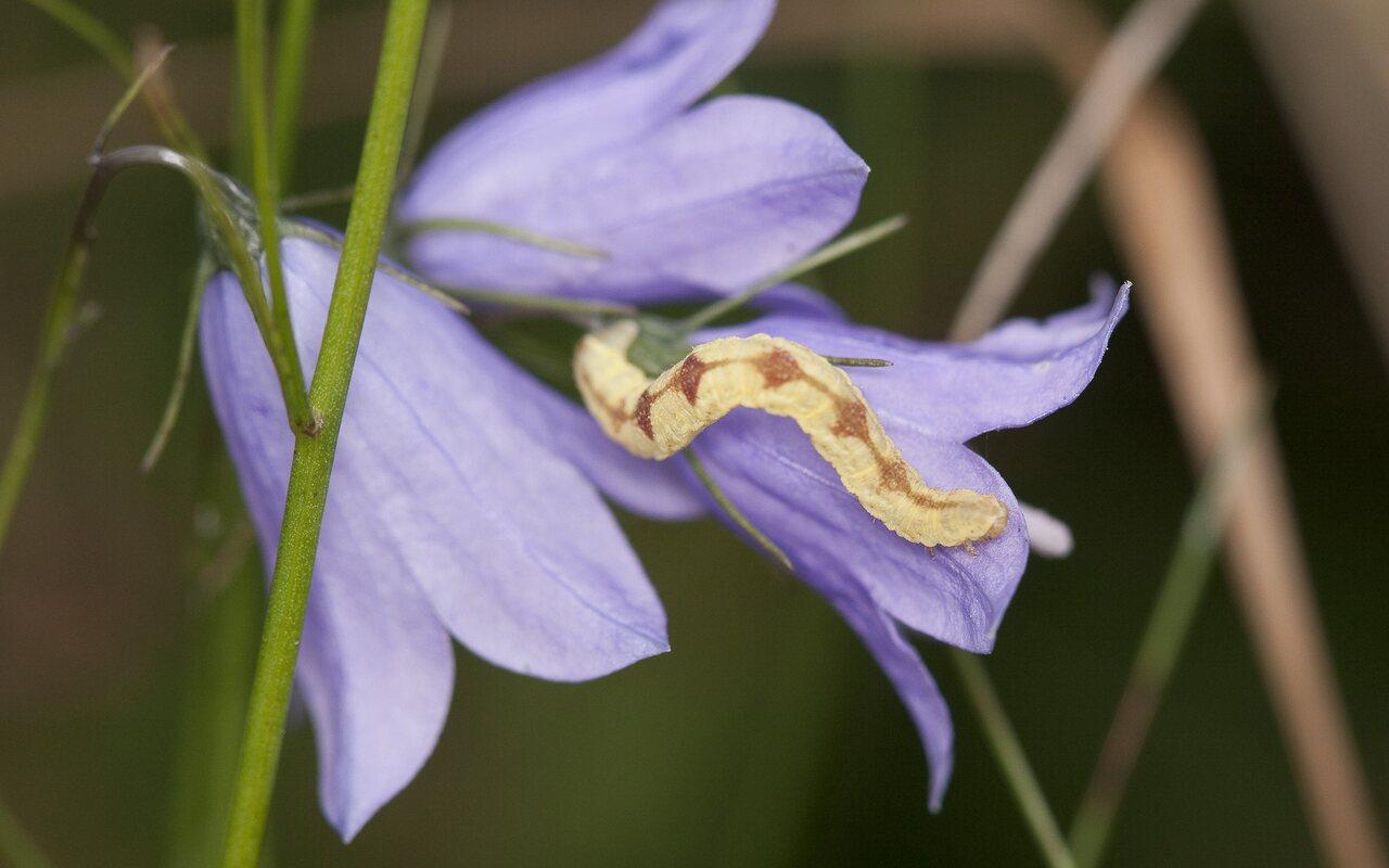 Lepidoptera-2290.jpg