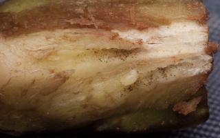 Urophora cardui, larva in gall · daginė margasparnė, lerva ant dirvinės usnies galo