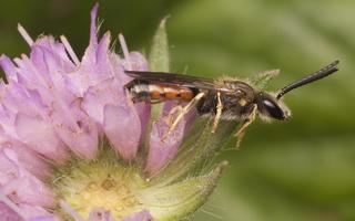 Hymenoptera 2353