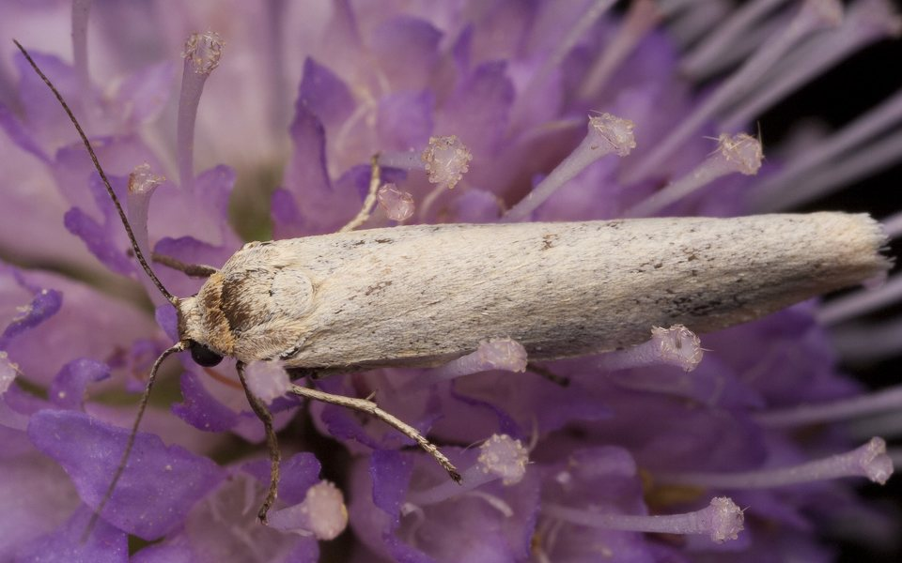 Lepidoptera-2365.jpg