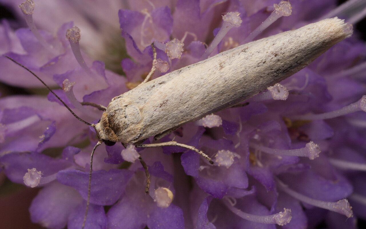 Lepidoptera-2366.jpg