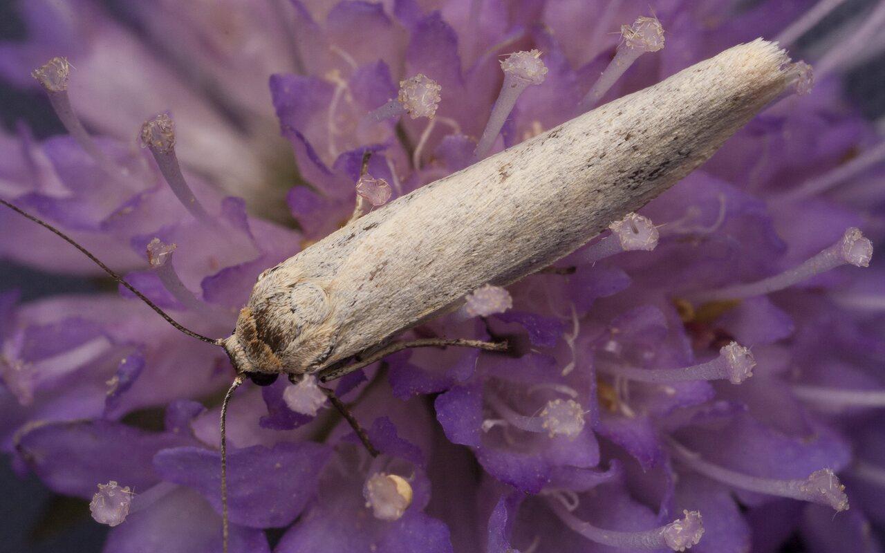 Lepidoptera-2368.jpg