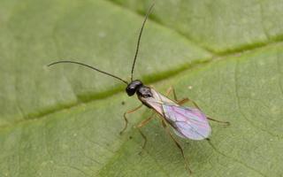 Hymenoptera 2592