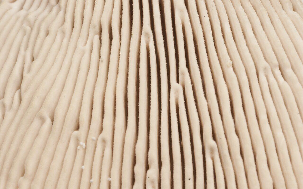 Fungi-2760.jpg