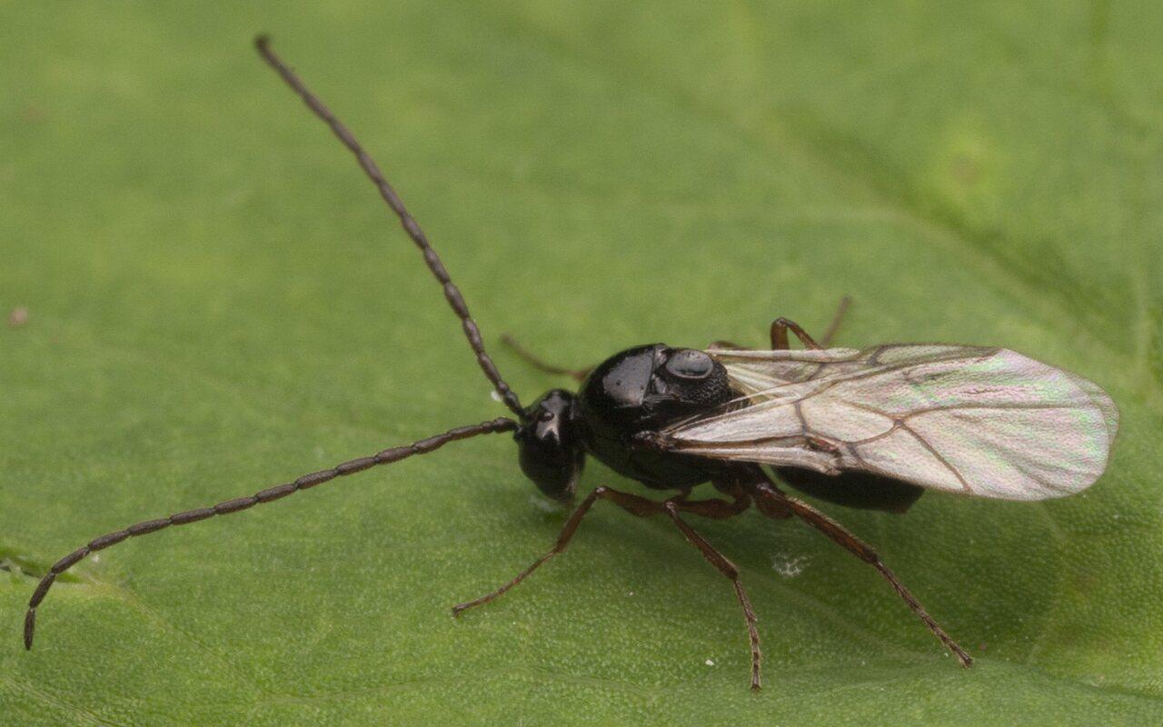 Hymenoptera-2845.jpg