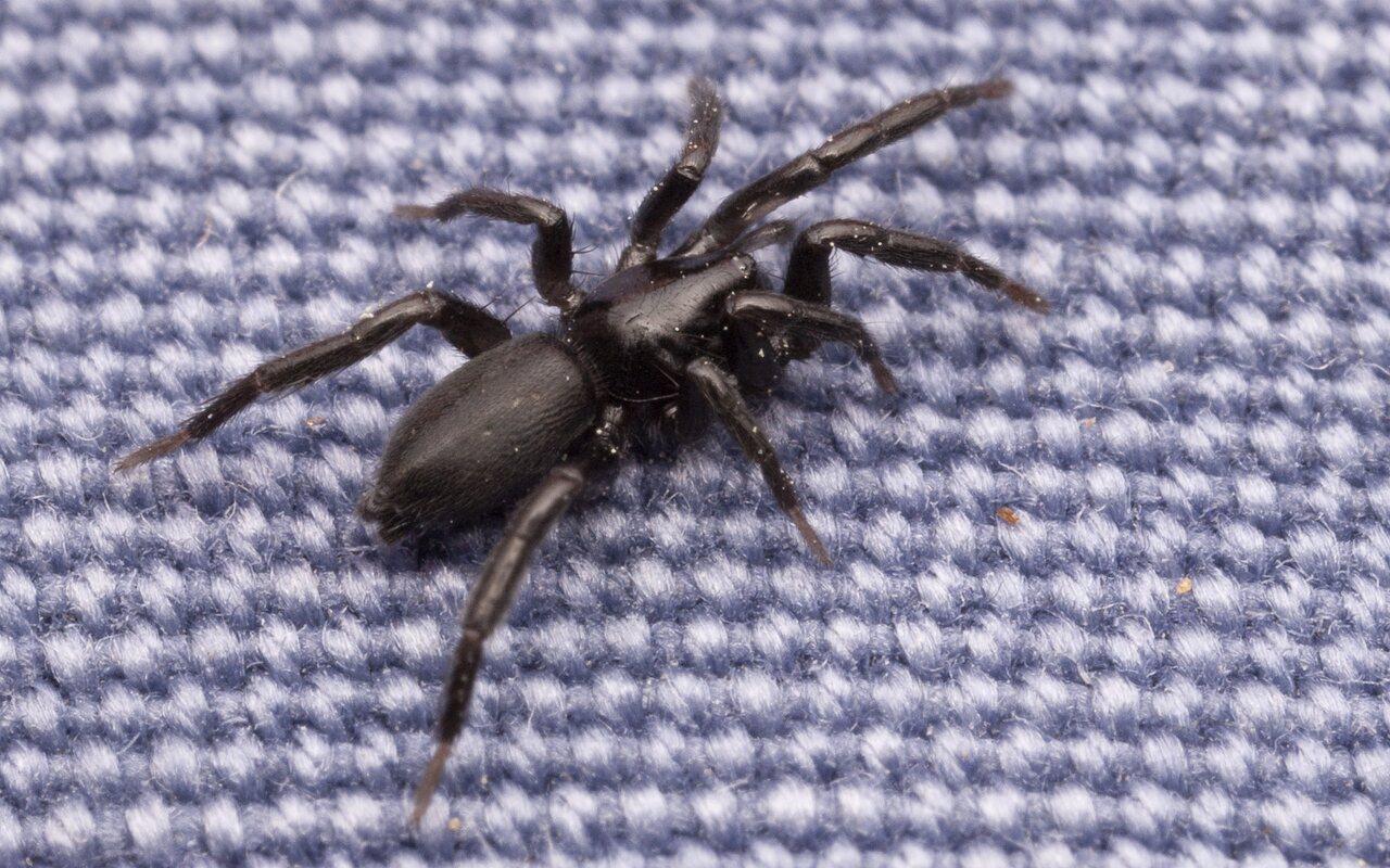 Araneae-2882.jpg