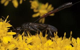 Hymenoptera 2932