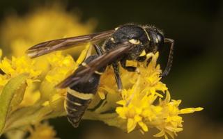 Hymenoptera 3020