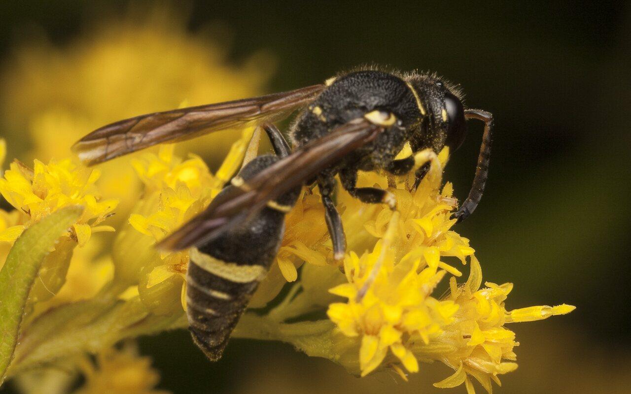 Hymenoptera-3020.jpg