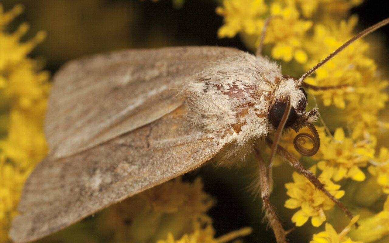 Lepidoptera-3029.jpg