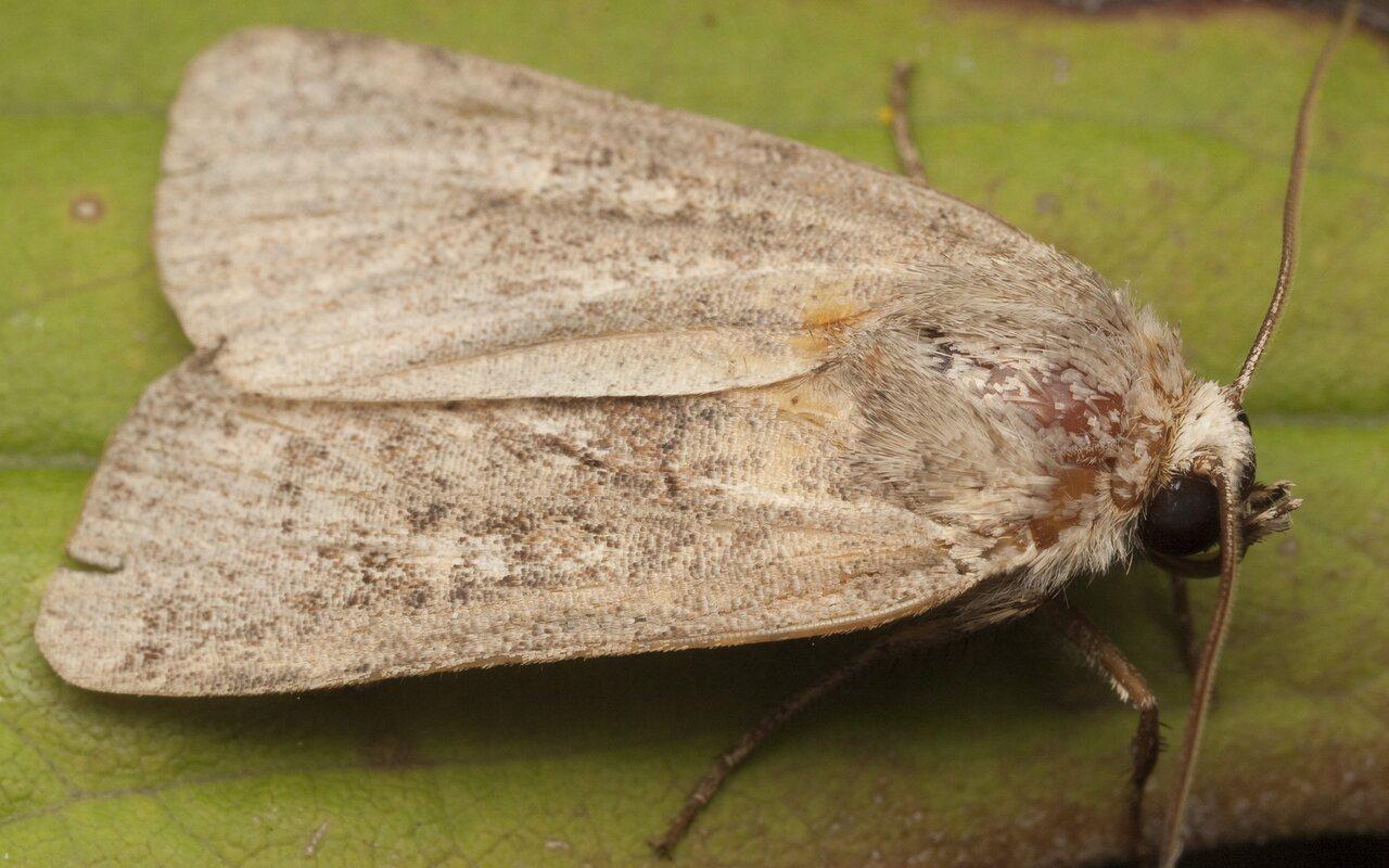 Lepidoptera-3031.jpg