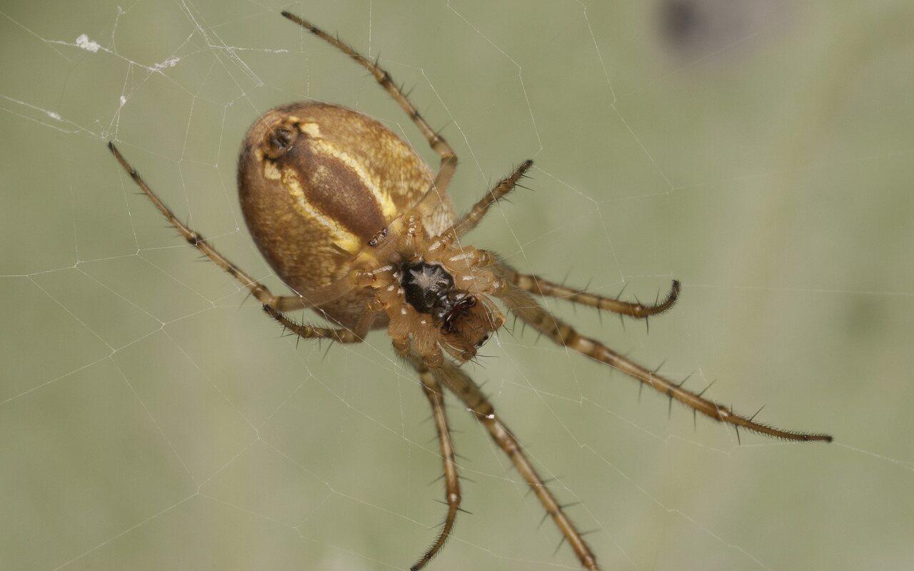 Araneae-3069.jpg