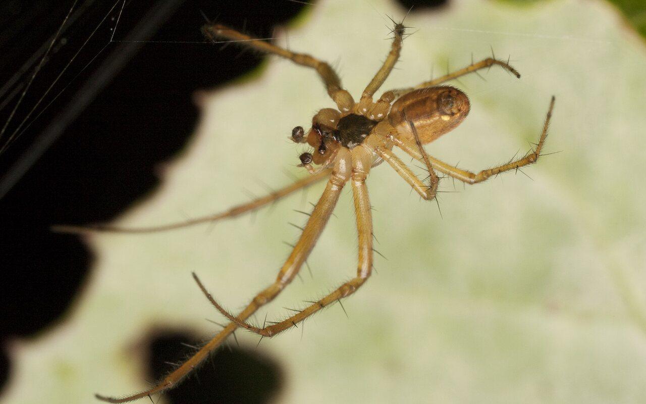 Araneae-3072.jpg