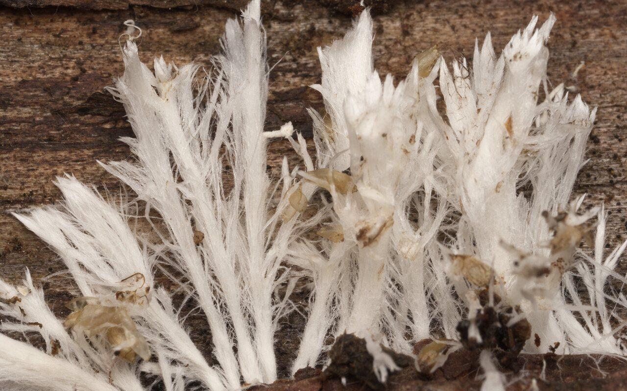 Fungi-3255.jpg