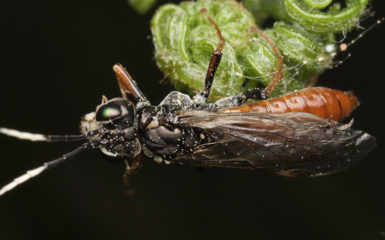 Hymenoptera-3321.jpg