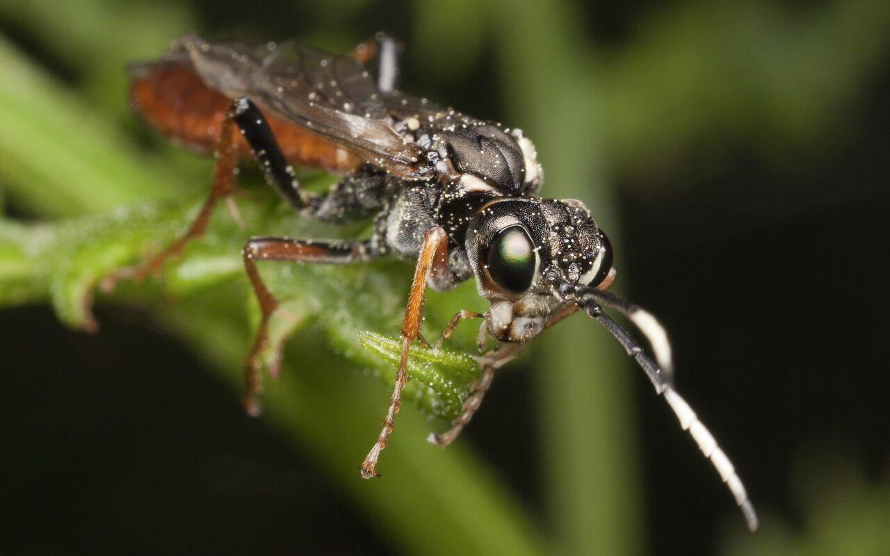 Hymenoptera-3322.jpg