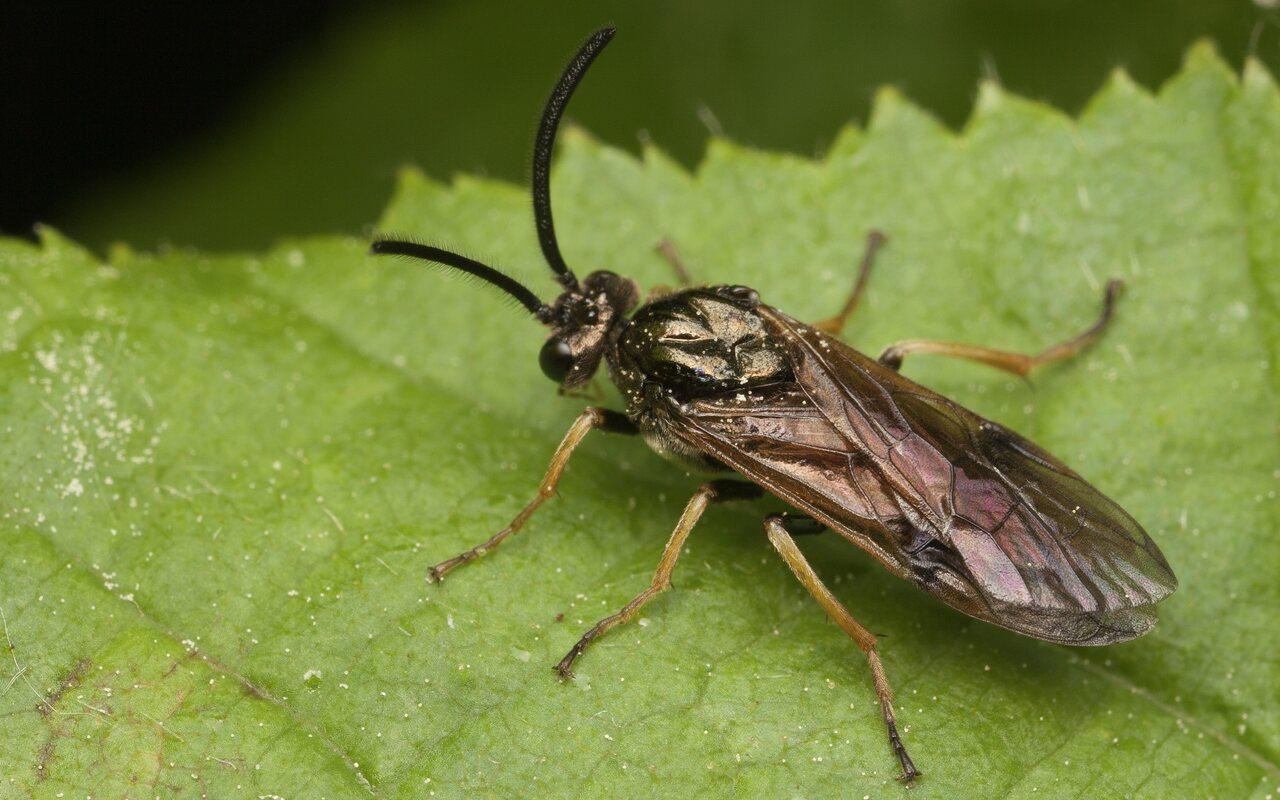 Hymenoptera-3425.jpg