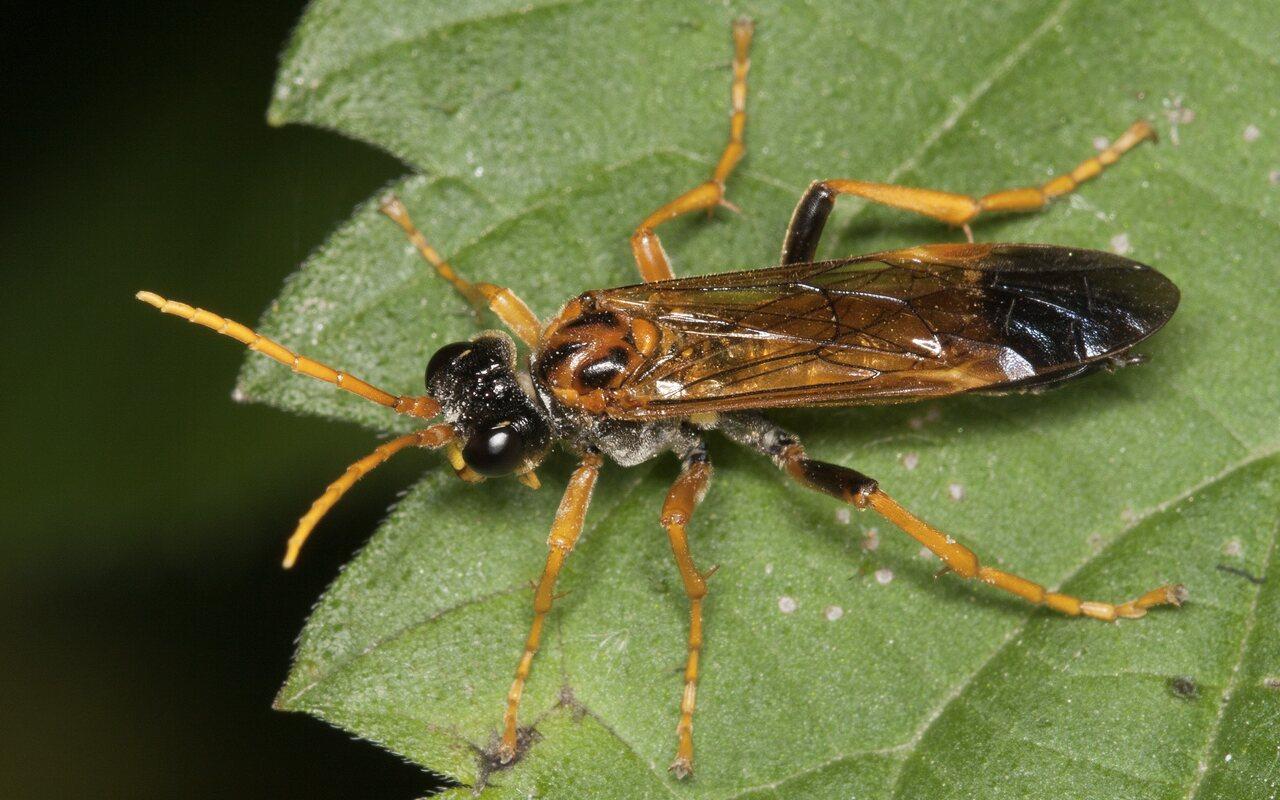 Hymenoptera-3583.jpg