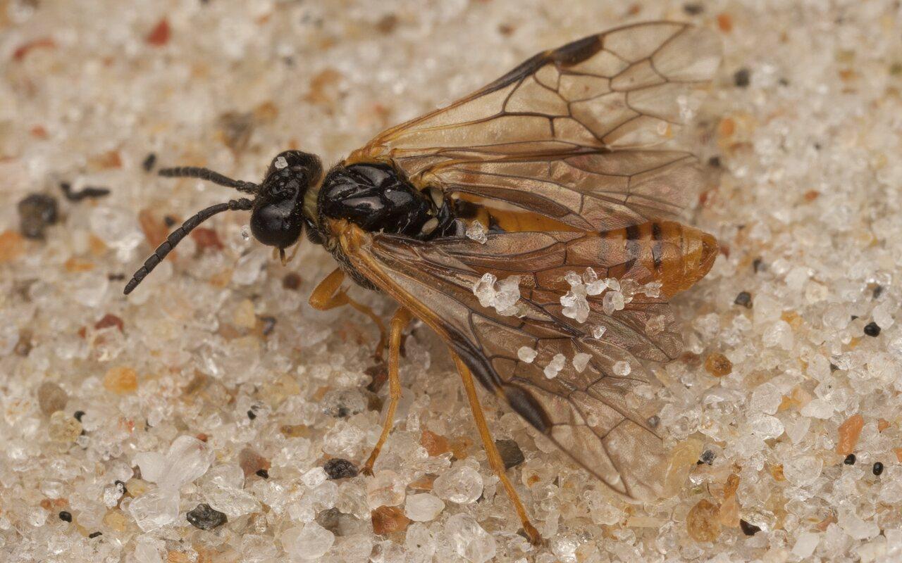 Hymenoptera-4038.jpg