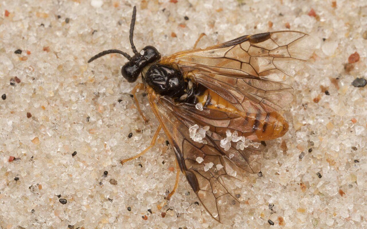Hymenoptera-4039.jpg