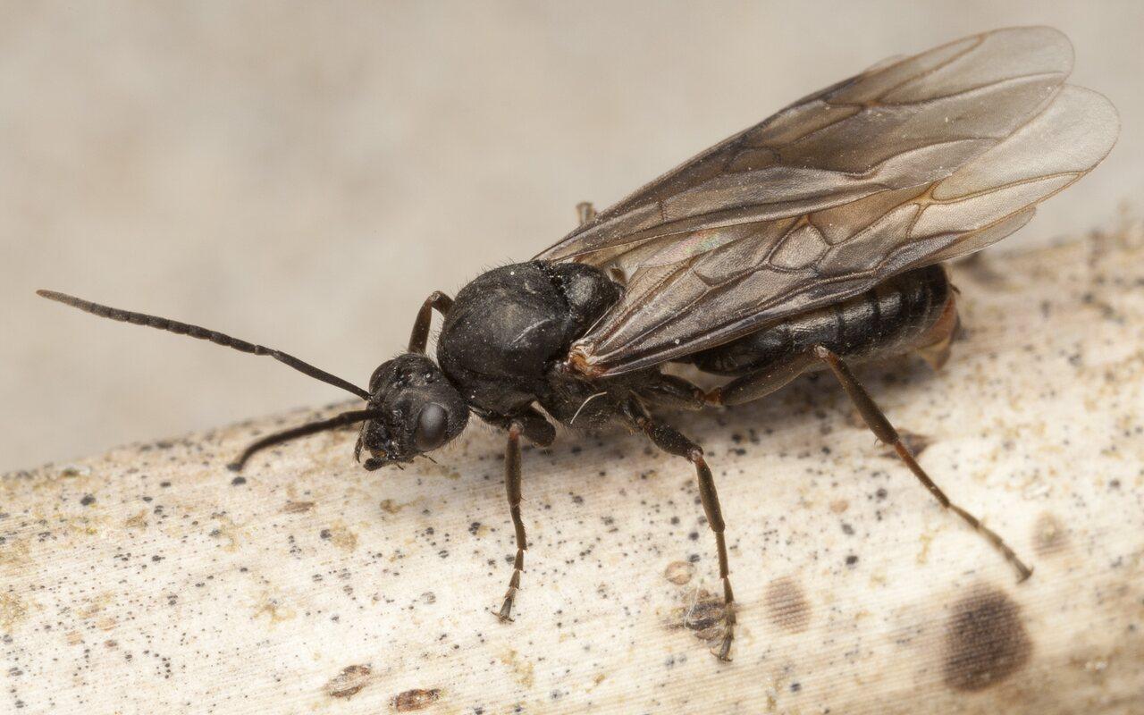 Formicidae-4156.jpg