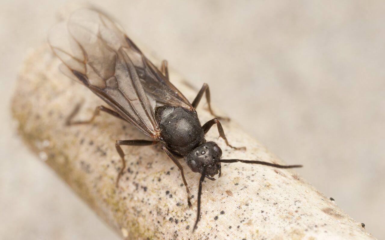 Formicidae-4159.jpg