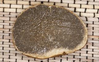 Rhizopogon luteolus · gelsvasis šakniagrybis