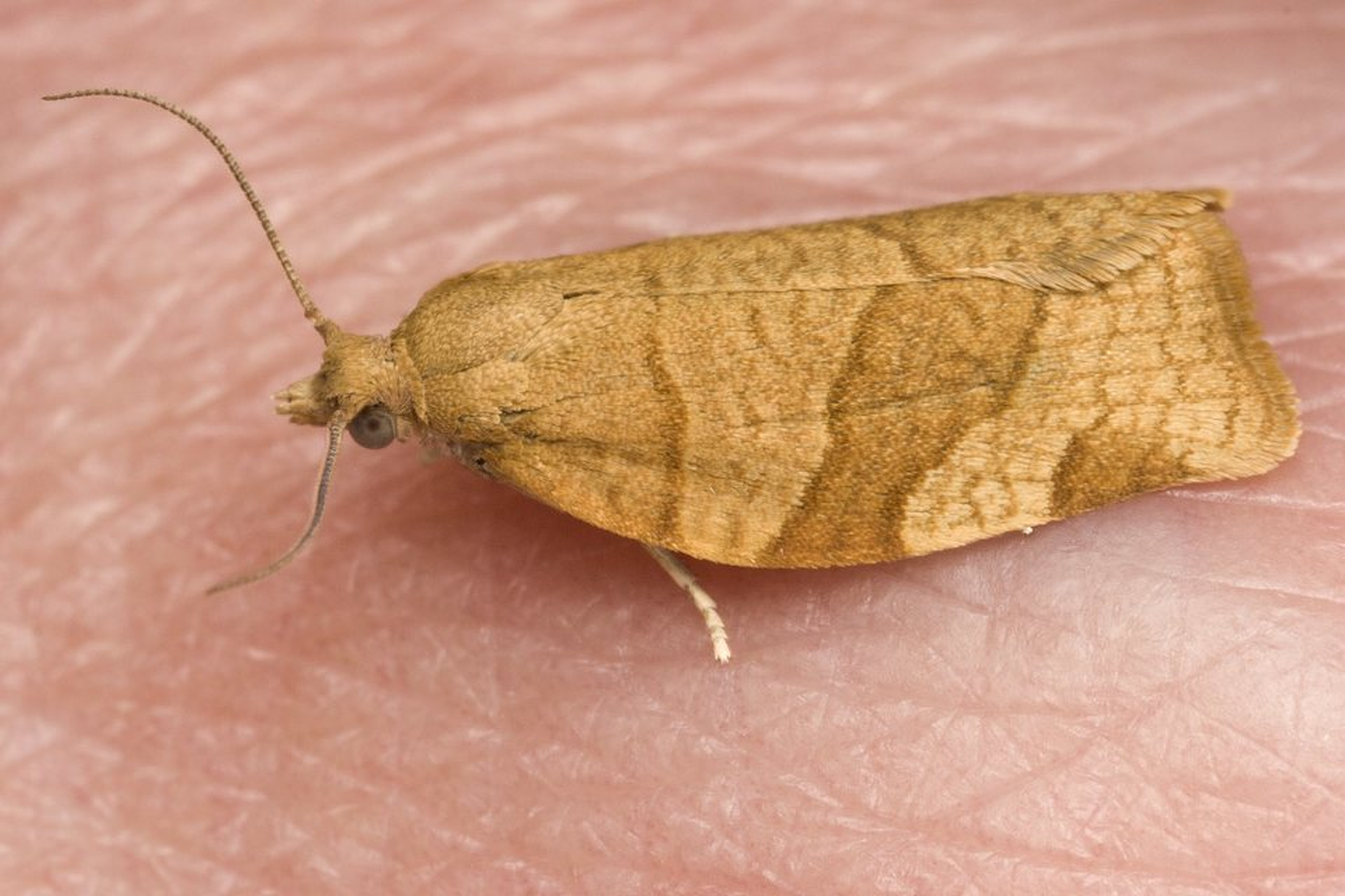 Lepidoptera-4648.jpg