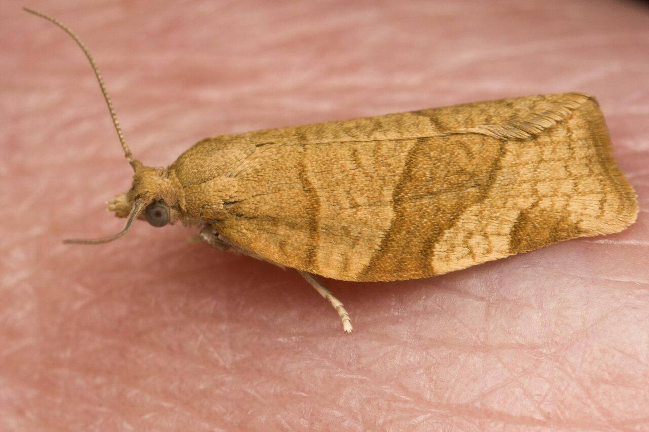 Lepidoptera-4649.jpg