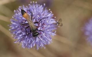 Hymenoptera 4682
