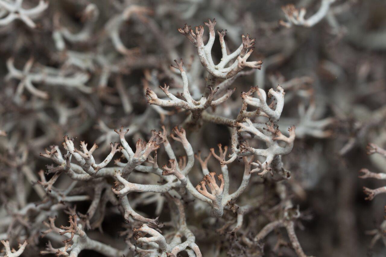 Lichens-0619.jpg
