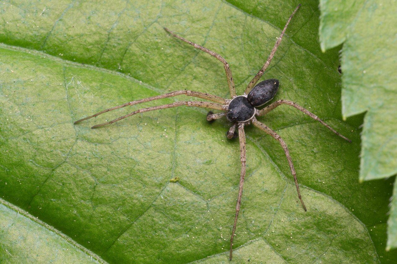 Araneae-1004.jpg
