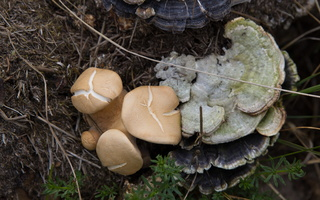 Fungi 1745