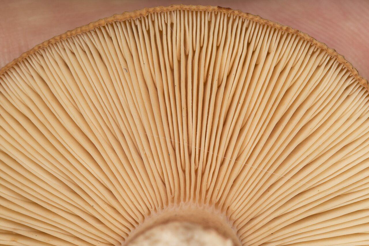 Fungi-2077.jpg