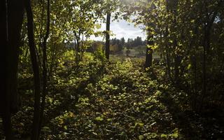 Botanikos sodas 2219